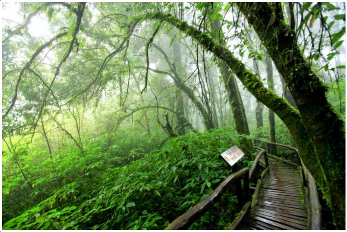Doi Inthanon National Park, nature trail