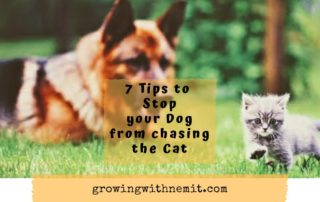 7 tips to stop your dog from chasing the cat