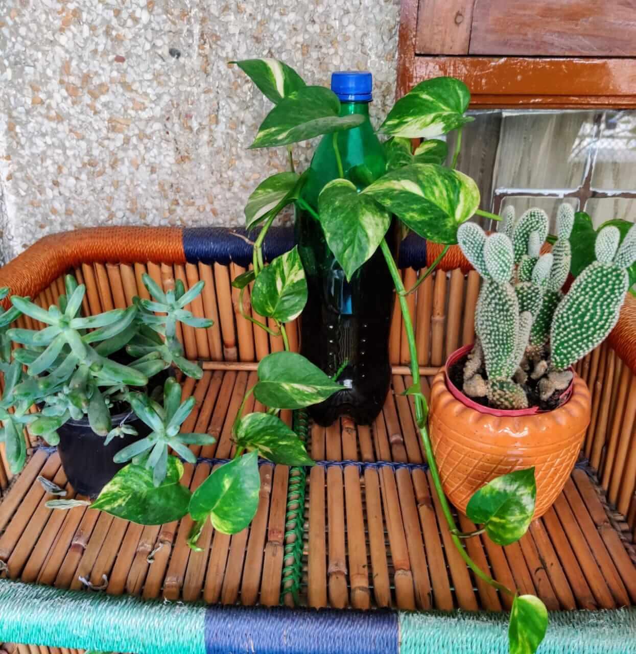Balcony Garden - DIY planters