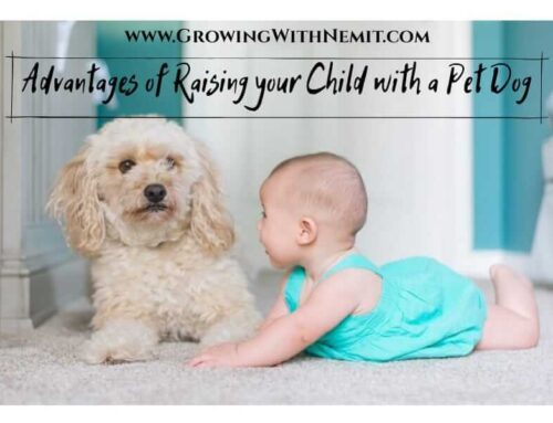 Advantages of Raising your Child with a Pet Dog