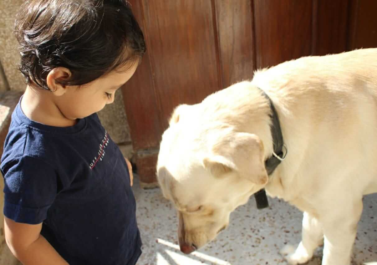 Raising a kid with a pet at home