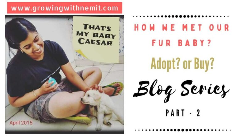 It took us some time to realize our mistake but today I want to share our learnings with you all in the hope to spread awareness. How We Met Our Fur Baby?