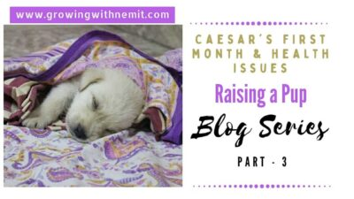 Raising a pup is just like raising a human baby & with Caesar it felt like we had a premature baby. I am writing about Caesar's first year with us.