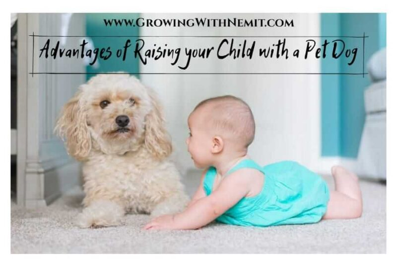 Some people think that a dog can be a threat to the child; that is not true. In fact, there are advantages if you are raising your child with a pet dog.